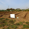 ワイワイ農園② エースの画像