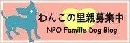 ファミーユDOGブログ