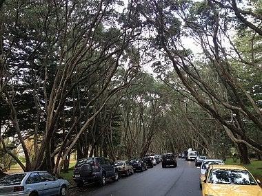 オークランド市内観光 One Tree Hill