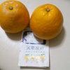天草晩柑の画像