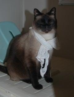 タオルを首に巻くジージ、