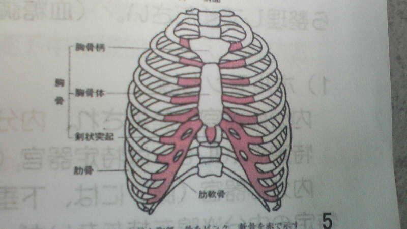 の 骨 について は どれ か 正しい