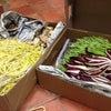 フランス食材大量入荷の画像