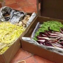 フランス食材大量入荷