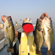 最近の釣果(琵琶湖、…
