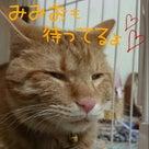 New商品☆の記事より