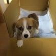 新入社犬ココ