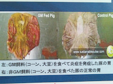 2014-06-13-08-14-32_deco.jpg