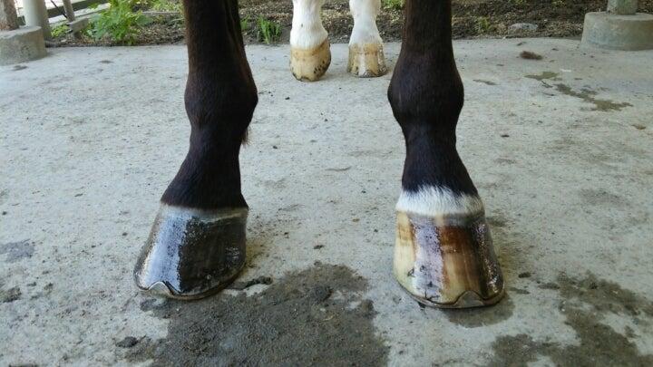 蹄は大事です