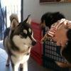 十犬十色 2の画像
