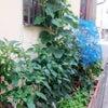 パオパオ菜園日記の画像
