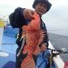 オニカサゴ釣果!の画像
