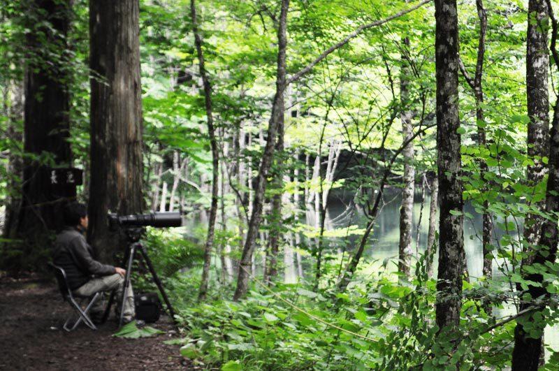2014年6月の白神山地の十二湖4