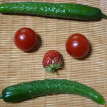 本日の収穫【変顔】