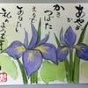 第二十九候 「菖蒲華さく」・・・No.348の画像