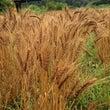 第4期麦のわ かりか…