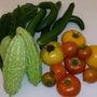 お野菜達★