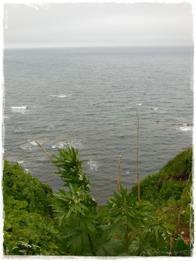のとり岬1