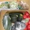 * 朝採り野菜が届きましたの画像