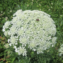 夏の野生の草花