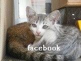 バナーフェイスブック