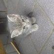 ☆ 捨て猫の旅立ち …