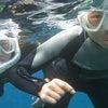 青の洞窟体験ダイビング、青の洞窟シュノーケル&パラセーリングならテイクダイブにお任せ!!の画像