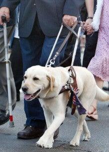 盲導犬虐待事件を通して考えたこと 生きづらさを共に乗り越える 虹の