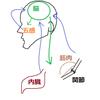 【ヒザの痛み 感想】     兵庫県 加古川市 はり灸ガルボの画像
