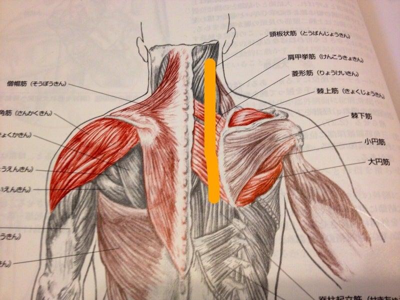 【改善報告】右の背中(肩甲骨の内側)の痛みで腕が上がら ...