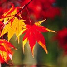秋の和菓子講座 〜紅…