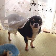 広島は雷と豪雨なんょ