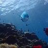暑くてたまらない今日は海遊びが最高♪青の洞窟へ体験ダイビング・シュノーケル・パラセーリングの画像