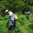 筑波山で外来植物の除…
