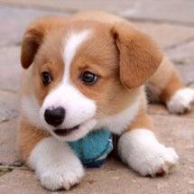 ② 食いしん坊犬