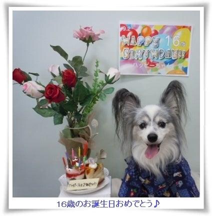 16歳のハッピーの誕生日