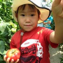 地元のトマトを収穫&…