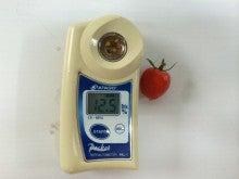 須藤物産 糖度検査