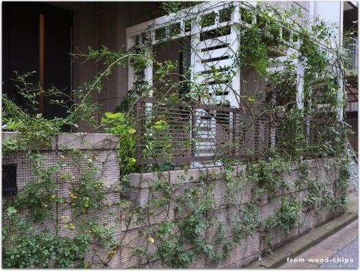 浦和市 バラの庭 パーゴラ