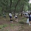 古賀市 松林の保全活…