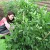ワイワイ農園⑬ 米を見守りしものの画像
