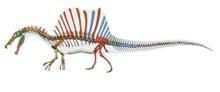 スピノサウルス骨格
