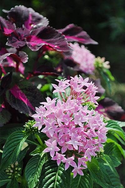 140913_flower