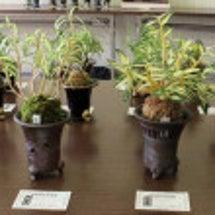 日本石斛保存会の秋の…