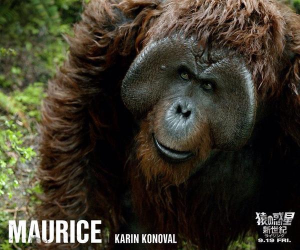 分かり合うのって難しいモーリス可愛い猿の惑星 新世紀観ました
