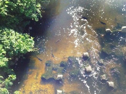植田川調査 | KIYOの釣り日記