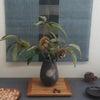 2014 なみき画廊 竹村嘉造陶展の画像