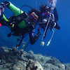 FUNダイバーから体験ダイビング・シュノーケル・パラセーリングまでおまかせ♪の画像