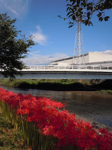 富士山と満開の彼岸花がお出迎え