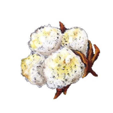 zuzuchoco